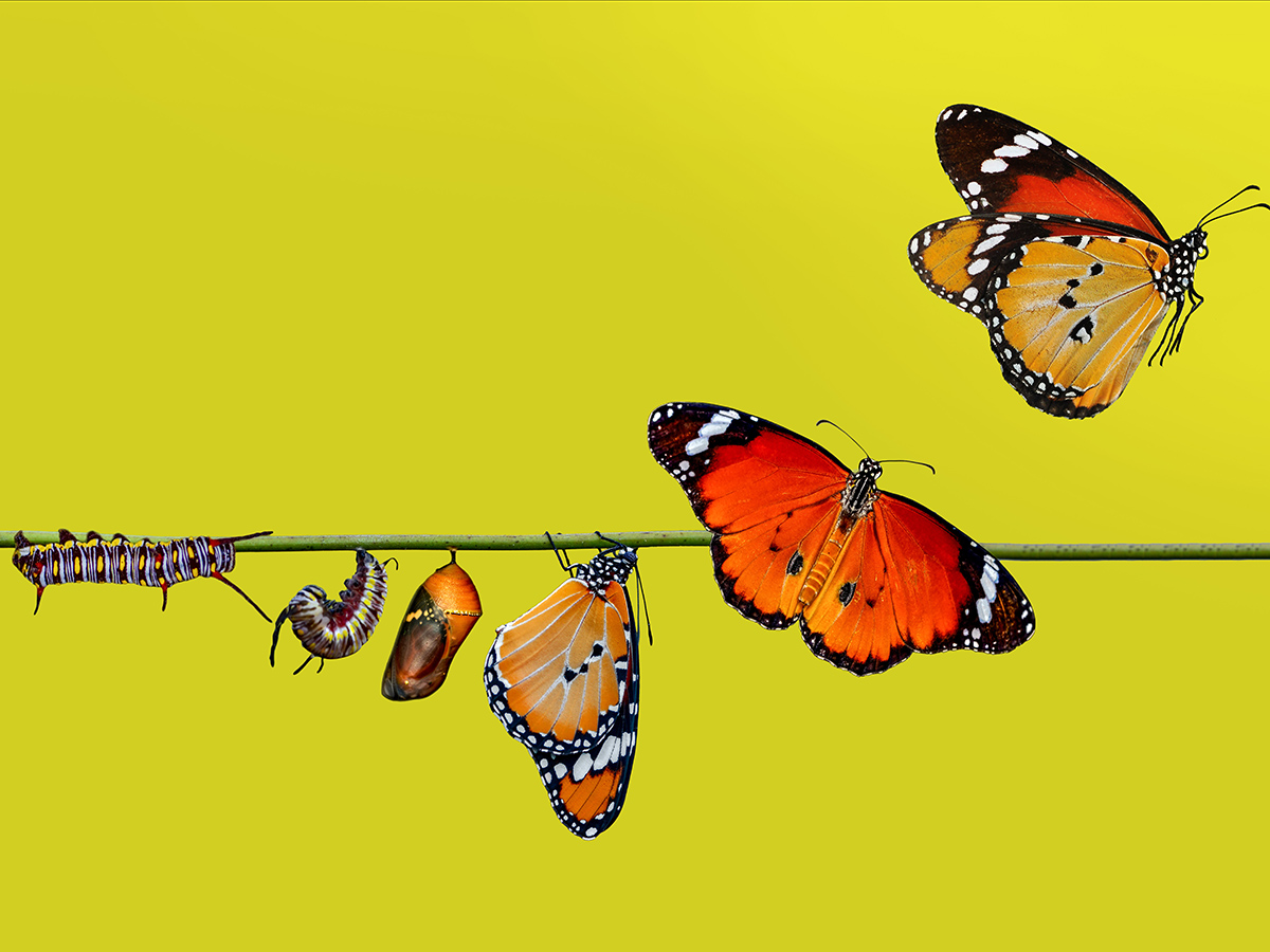 A farm for butterflies, pupae and cocoons are suspended. Concept