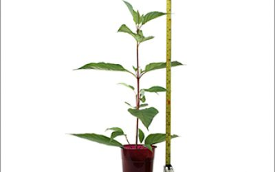 growth-tape-measure-plant