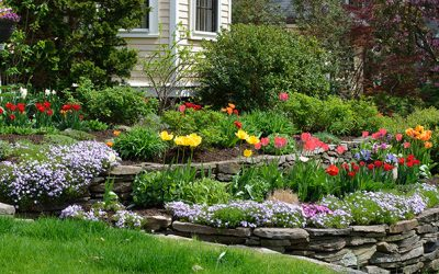 Hilliside landscaping with natural stones, tulips and flox. Classic and colorful garden.
