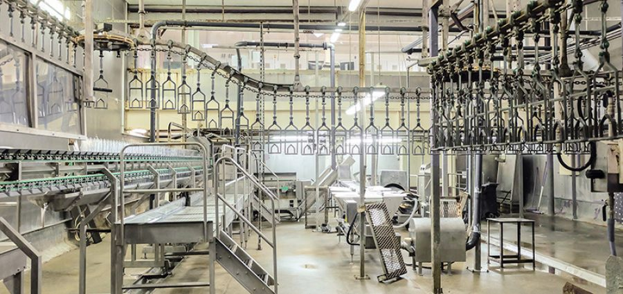 Empty butchering workshop poultry with overhead conveyor. Poultry processing plant line. Production of chicken meat, meat processing equipment.